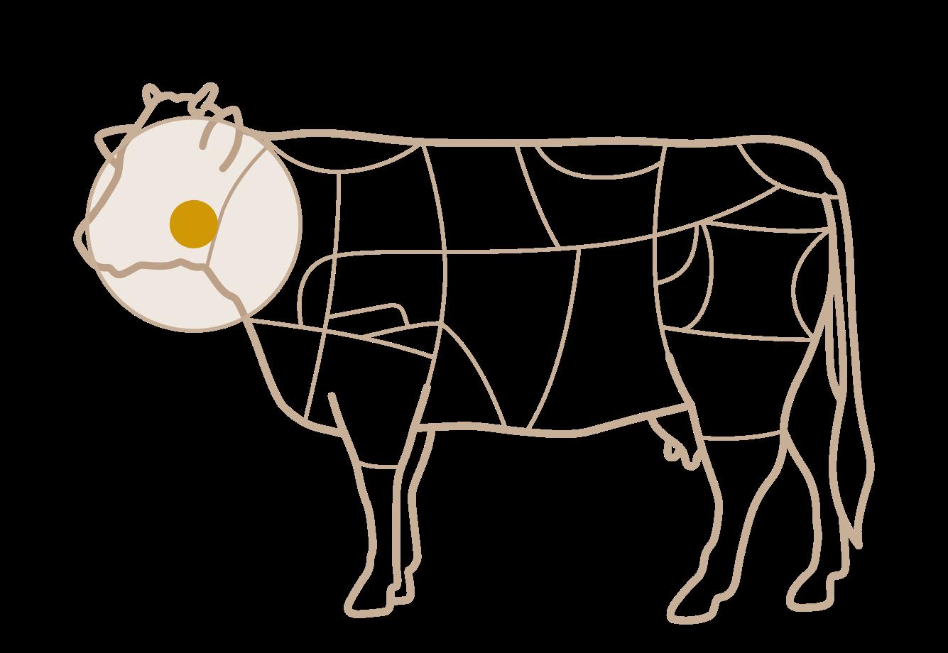 Tipo de corte vaca